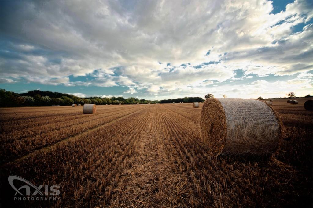 hay-field-01